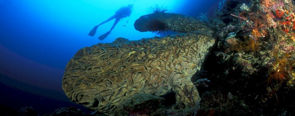 Indonesia Diving Season