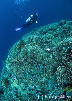 best diving in Indonesia with coral