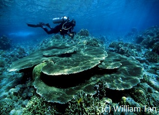 Dive Sulawesi for table coral in Gorontalo