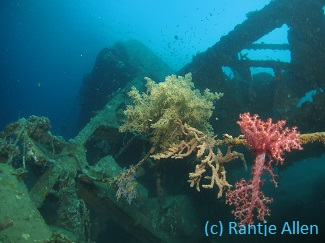 wreck diving in Gorontalo with soft corals