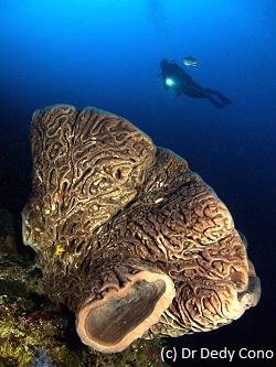 sponge salvador dali berbentuk bunga