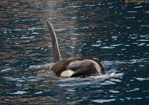 orca video still