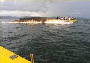 sperm whale carcass