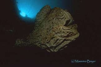 Sponge spawning of Salvador Dali