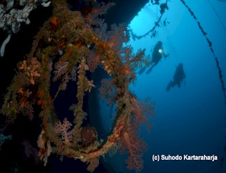 Scuba Divers Diving on Sulawesi's Tjenderawashi Barge Wreck